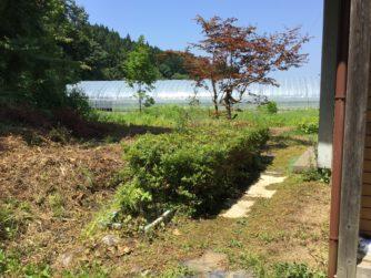 庭の草刈り剪定作業とお墓掃除